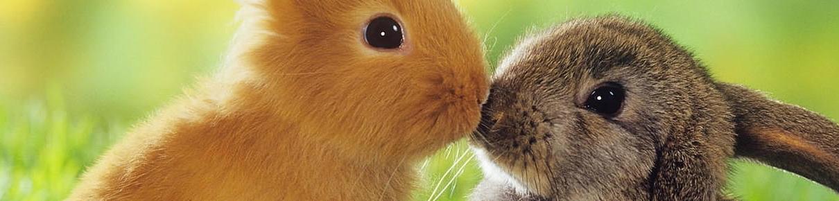 Online gnavershop til Kanin og Marsvin