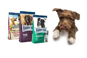 Happy dog hund