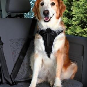 Hunde sikkerhedssele til bilen