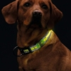 LED halsbånd til hund