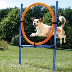 agility ring til hundetræning