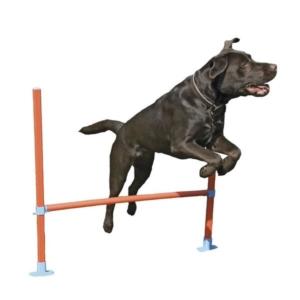 Agility træning hop til hund