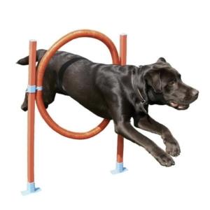Agility træning hop med ring