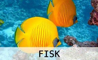 Tilbehør til akvarie fisk