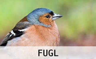 Tilbehør til fugle