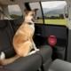 Dørbeskyttelse til hund i bilen