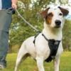 sikkerhedssele til hund i bil