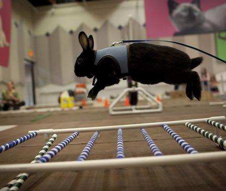 Kaninspring længdespring