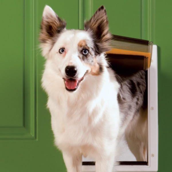 Isoleret hundelem Hundelem med
